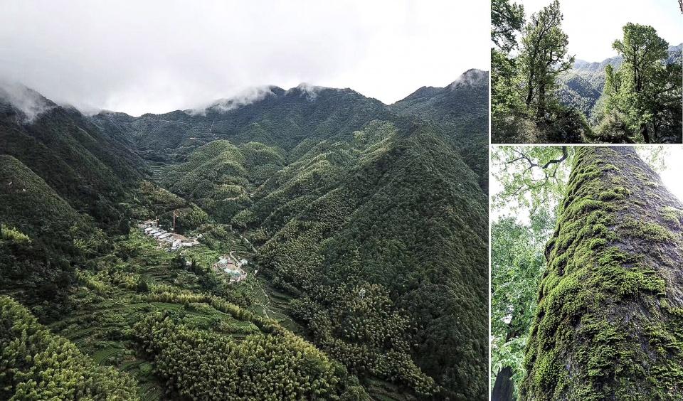 松阳原舍 · 揽树山房——人工化的自然
